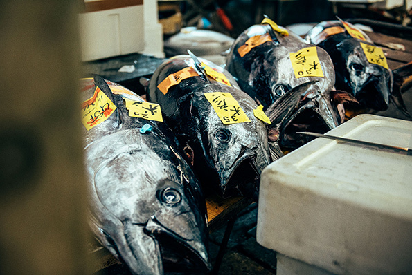 Nico-Tokyo-Fish-Market-itsnicethat-13