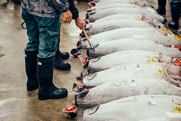 Nico-Tokyo-Fish-Market-itsnicethat-2